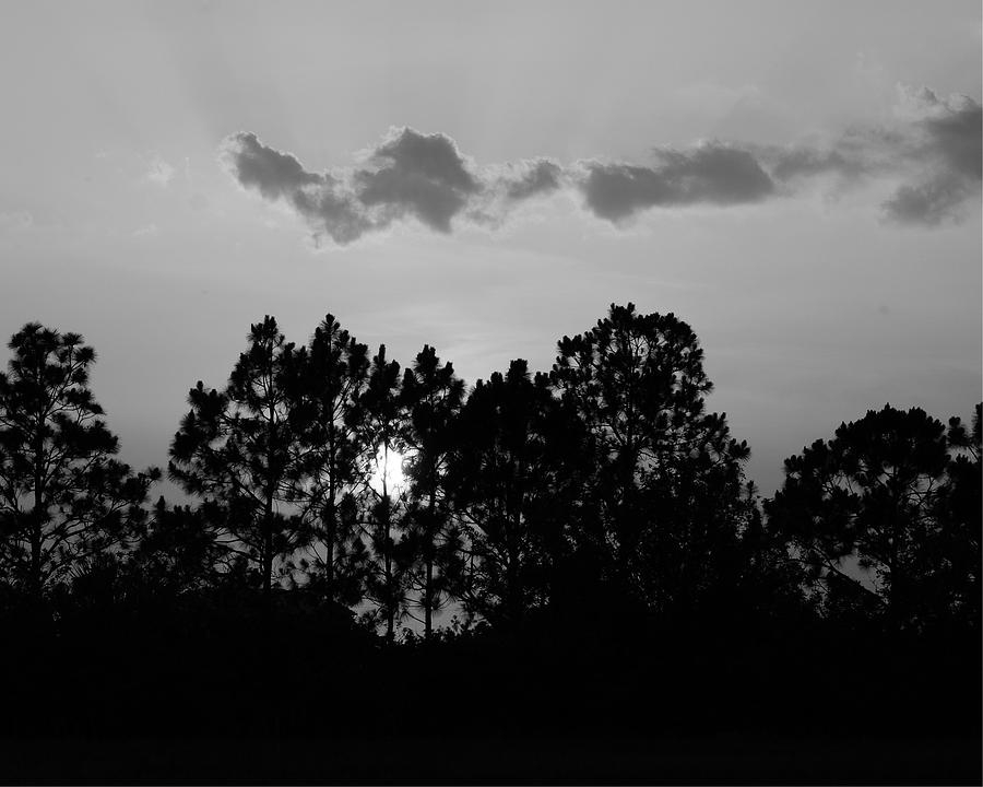 Black Photograph - Behind The Trees by Florene Welebny