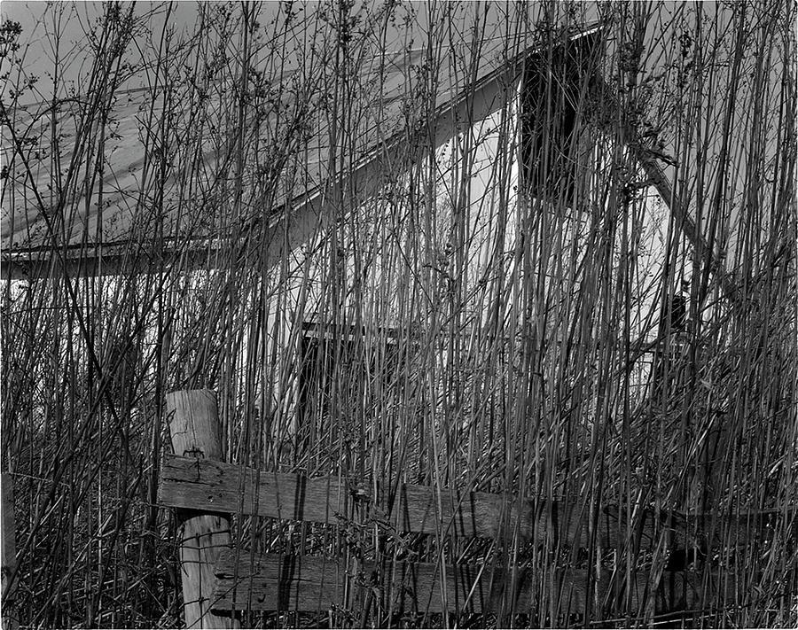 My Art Photos Photograph - Behind The Weeds  by Dennis Sullivan