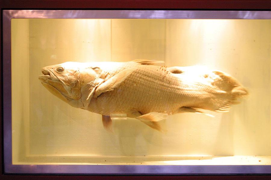 Photographer Photograph - Beige Fish by Jez C Self