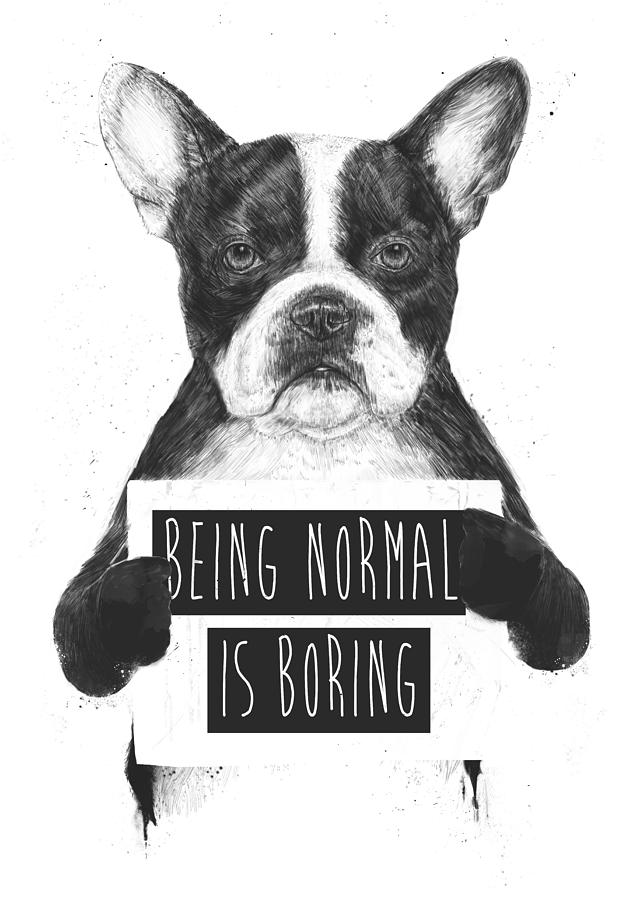 Bulldog Drawing - Being Normal Is Boring by Balazs Solti