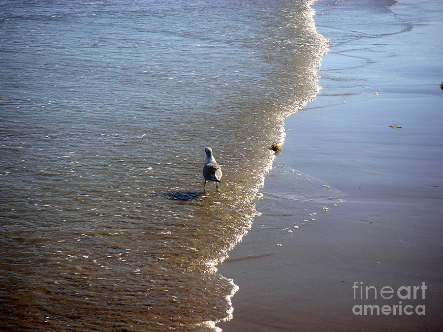 Nature Photograph - Being One With The Gulf - Ahead by Lucyna A M Green