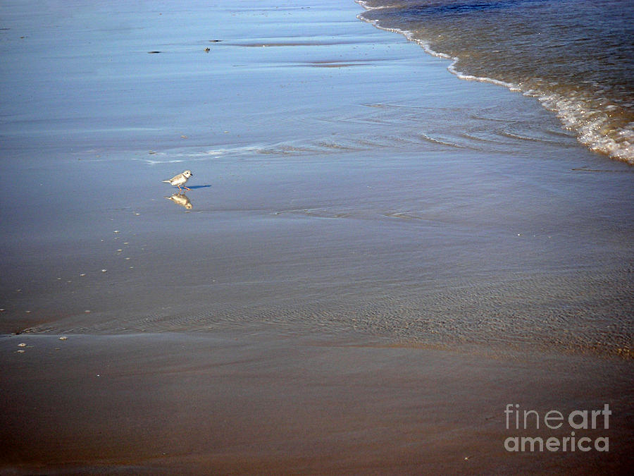 Nature Photograph - Being One With The Gulf - Cautious by Lucyna A M Green