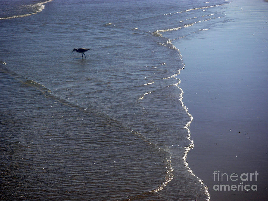 Nature Photograph - Being One With The Gulf - Pinpointing by Lucyna A M Green