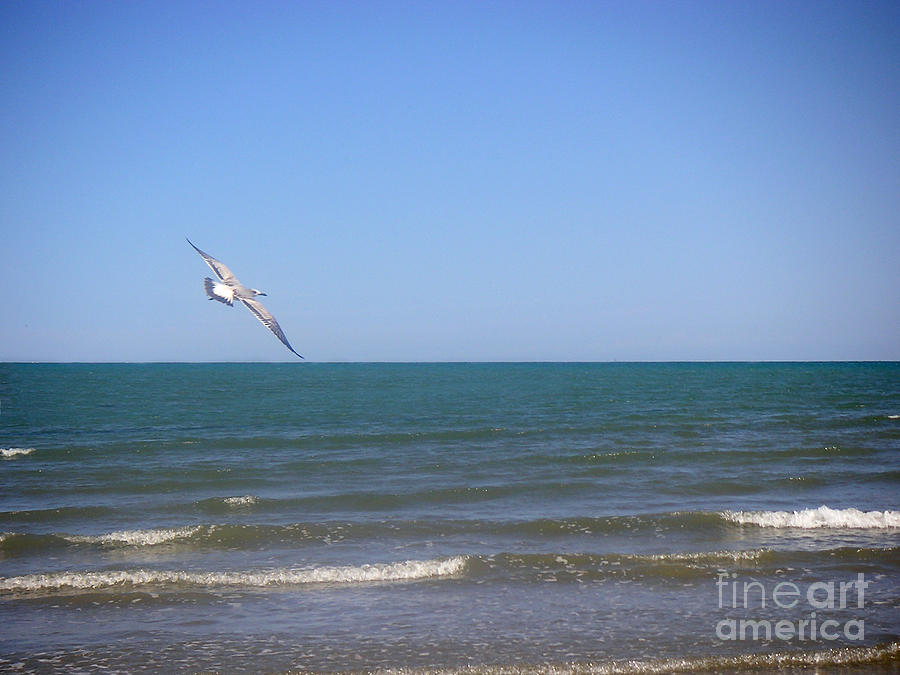 Nature Photograph - Being One With The Gulf - Soaring by Lucyna A M Green