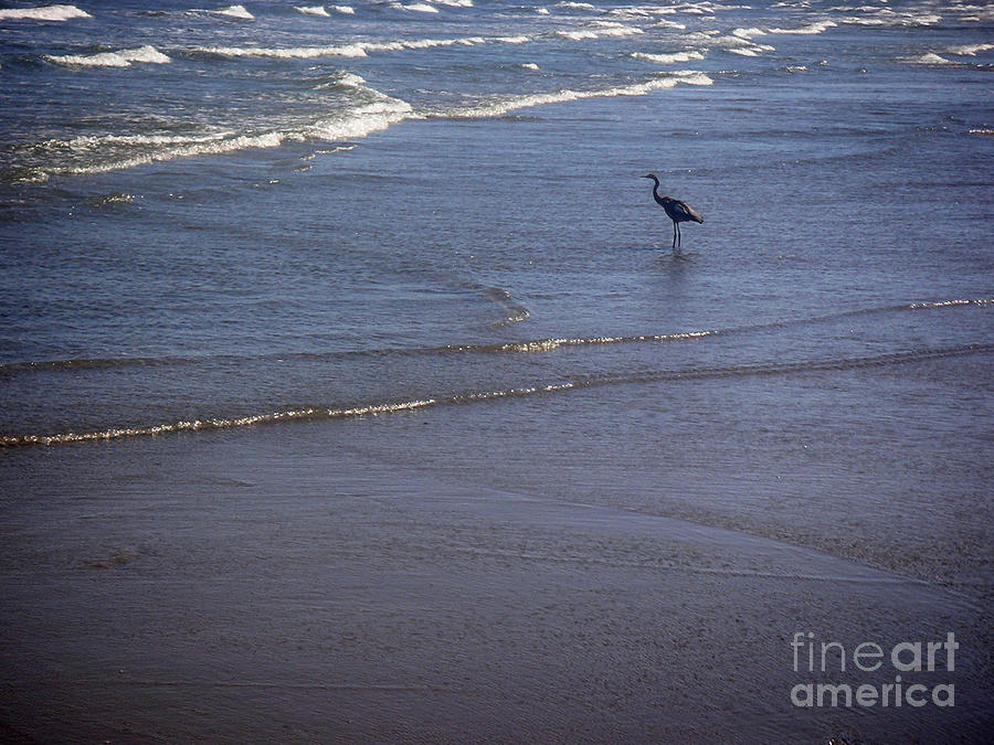 Nature Photograph - Being One With The Gulf - Watching by Lucyna A M Green