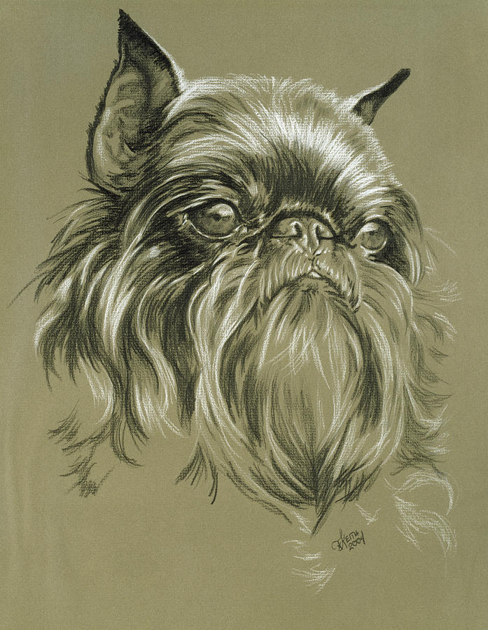 Toy Group Drawing - Belgian Griffon by Barbara Keith