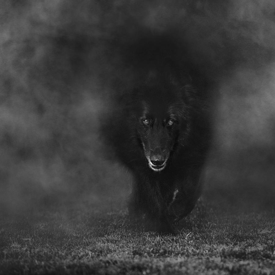 Black Wolf Walking Www Pixshark Com Images Galleries