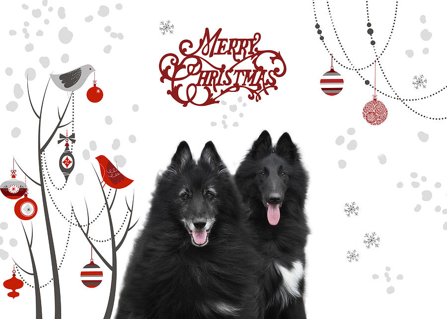 Belgian Shepherd Christmas Card 5 Photograph by Wolf Shadow Photography