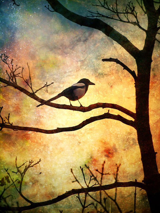 Bird Photograph - Believing In The Morning by Tara Turner