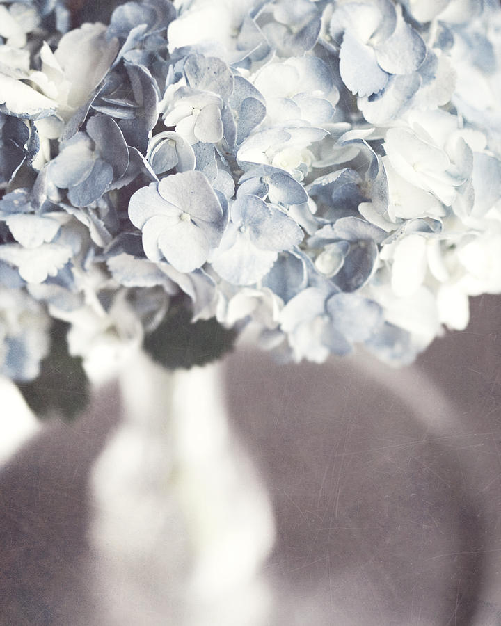 Hydrangea Photograph - Bella Donna by Lisa Russo