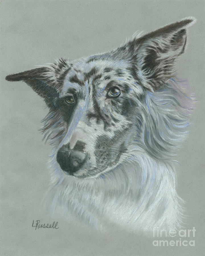 Dog Drawing - Bella  by Laura Russell