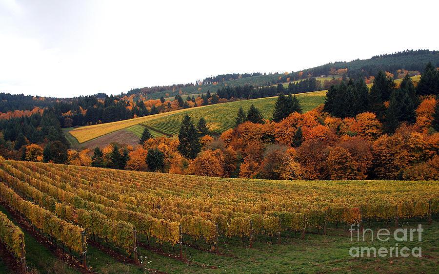Vineyard Photograph - Bella Vida Vineyard 2 by Sherrie Triest