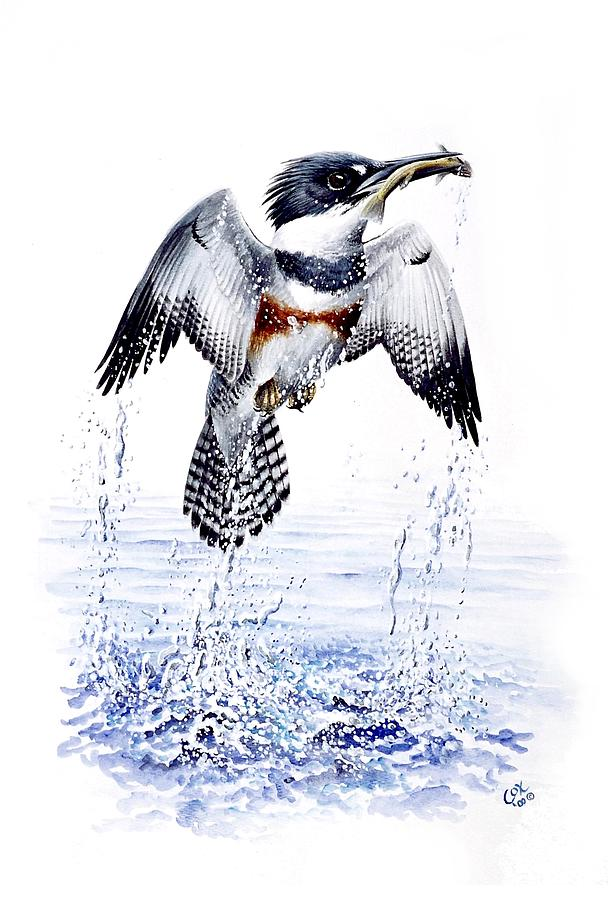 Chris Cox Painting - Belted Kingfisher by Christopher Cox