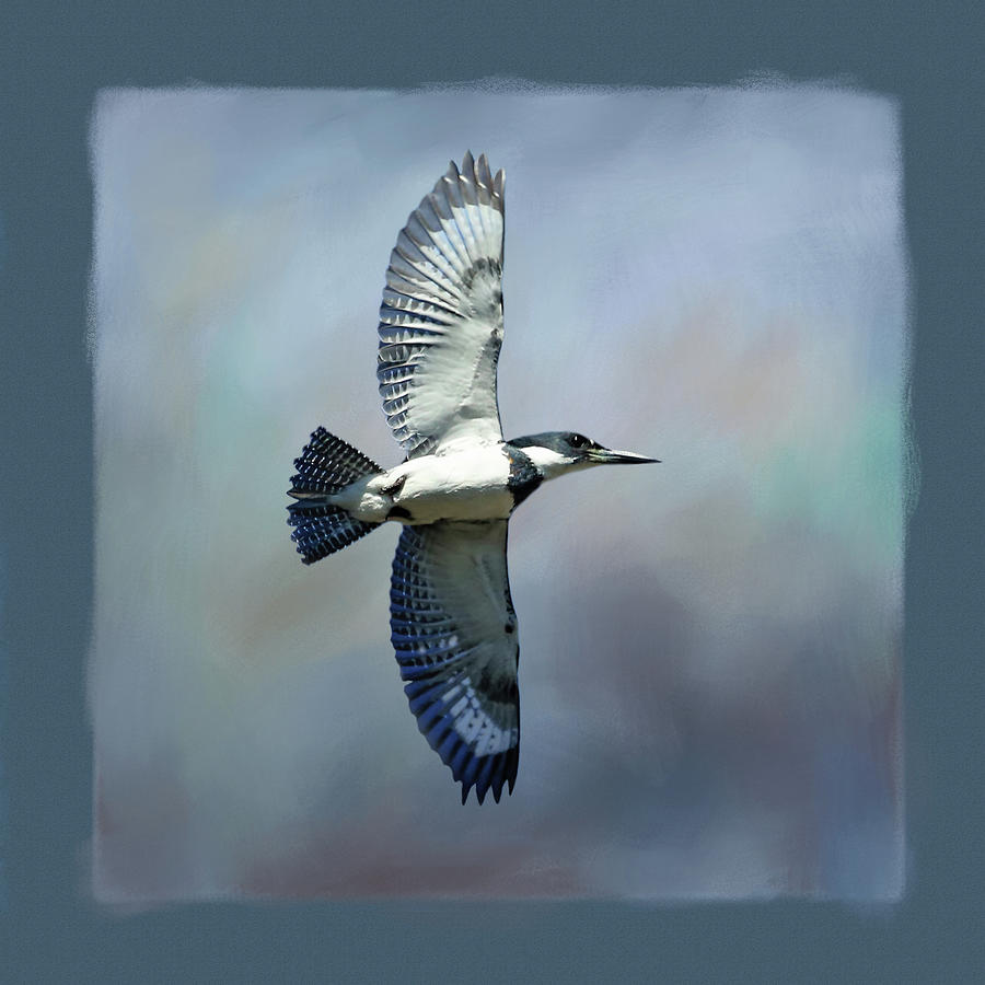 Belted Kingfisher Photograph - Belted Kingfisher by Donna Kennedy