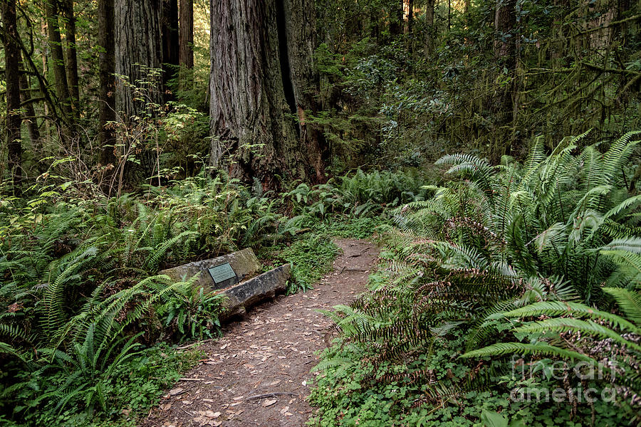Bench And Ferns by Al Andersen