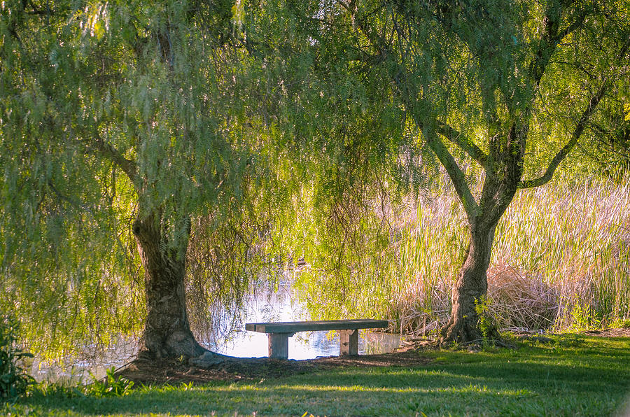 Bench And Weeping Willow Trees Overlooking Pond Photograph