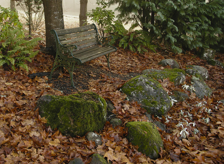Bench Photograph - Bench In Fall by Jean Noren