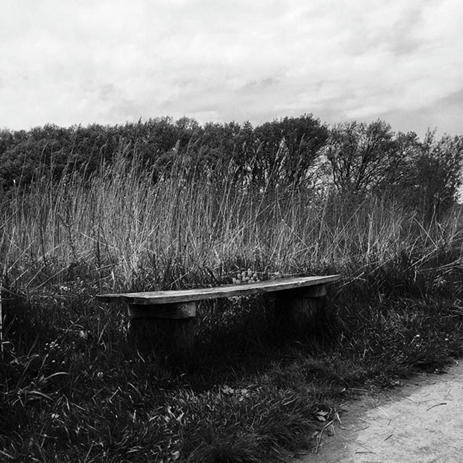 Black And White Photograph - Bench In The Prairie by Frank J Casella