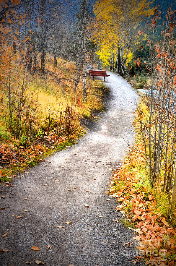 Autumn Photograph - Bench On A Hill by Tara Turner