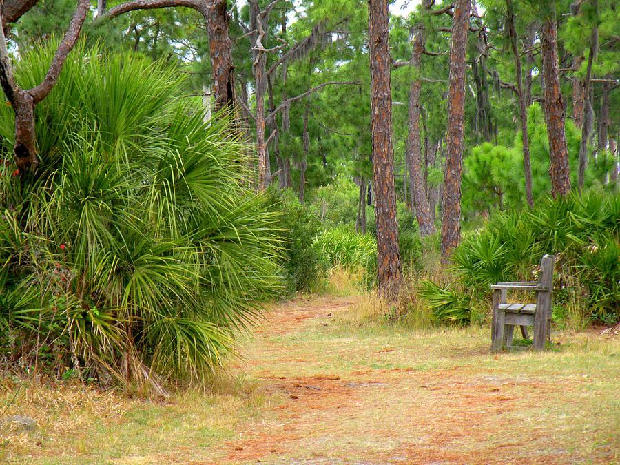 Landscape Photograph - Bench On The Nature Walk by Rosalie Scanlon
