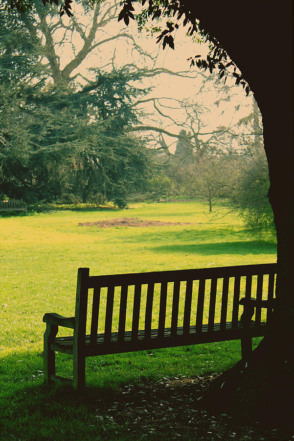 Empty Bench Photograph - Bench Under A Tree by Jasna Buncic