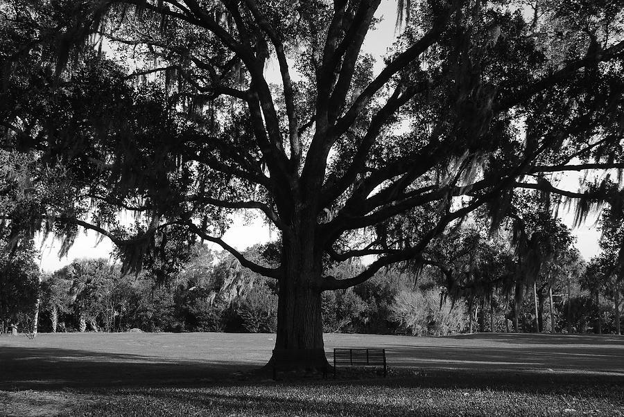 Park Bench Photograph - Bench Under Oak by David Lee Thompson