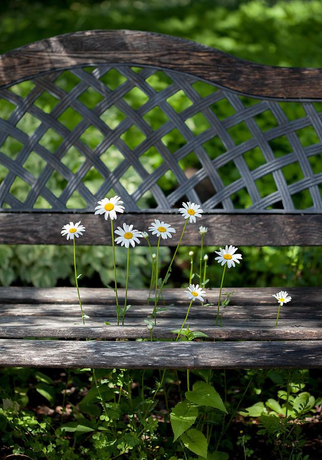 Benched by Aaron Aldrich