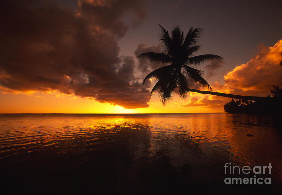 Bent Photograph - Bending Palm by Ron Dahlquist - Printscapes