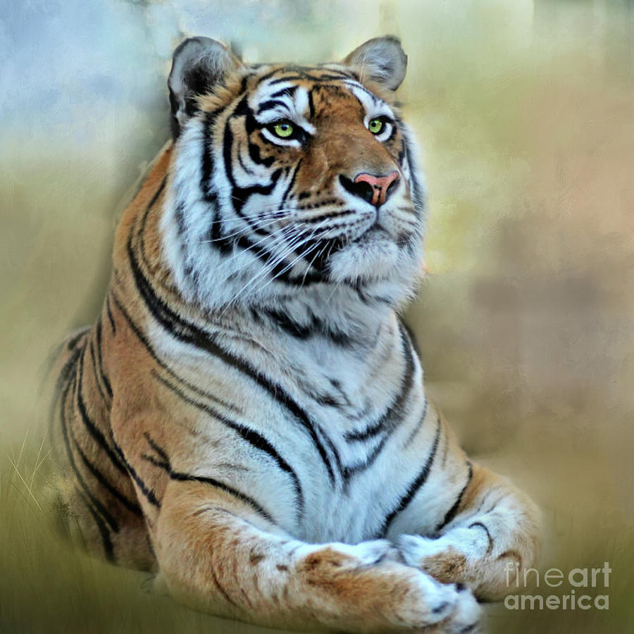 Bengal Tiger Beauty by Peggy Franz