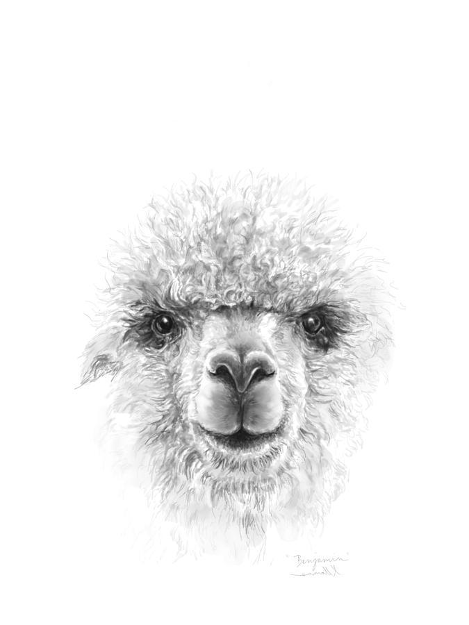 Llamas Drawing - Benjamin by K Llamas