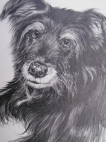 Dog Painting - Benson by Keran Sunaski Gilmore
