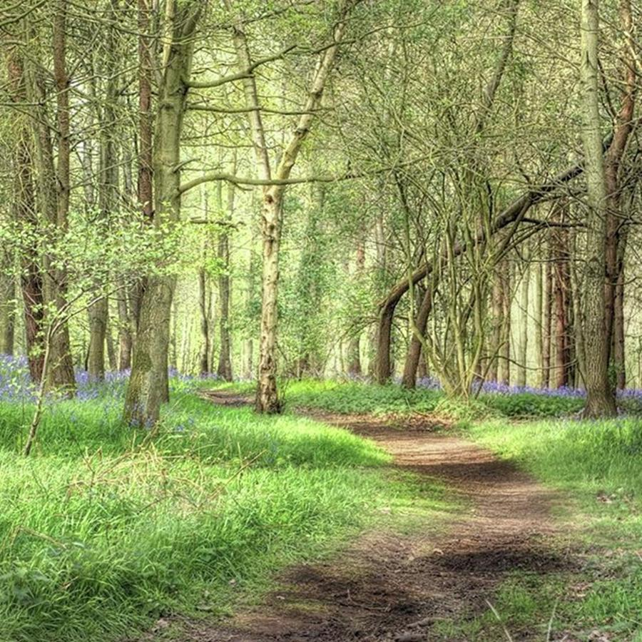 Nature Photograph - Bentley Woods, Warwickshire #landscape by John Edwards