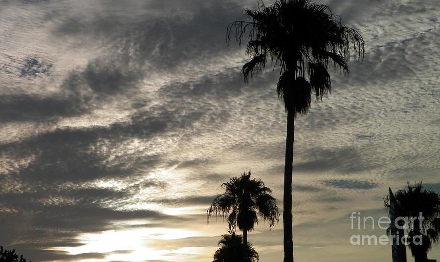 Bermuda Photograph - Bermuda Palms by Gina Sullivan