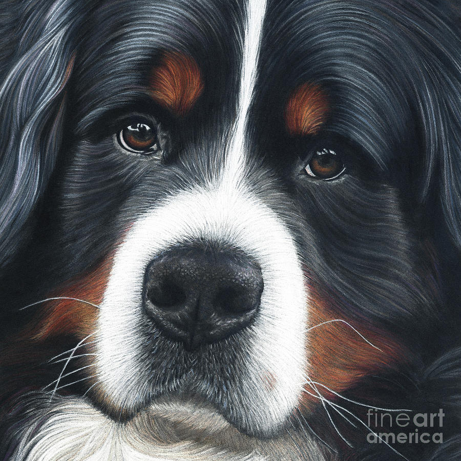 Bernese Painting - Up Close by Donna Mulley