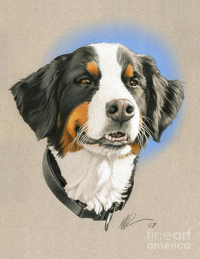 Bernese Mountain Dog Painting By Marshall Robinson