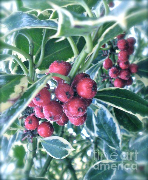 Berries Photograph - Berries by Hayley Brush