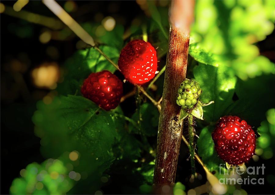 Berries,Berries,Berries by JB Thomas