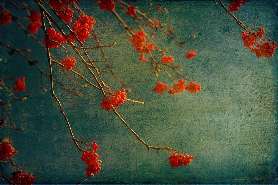 Berry Photograph - Berry Nice by Angela King-Jones