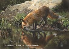 Fox Painting - Beside Still Waters - Red Fox by Rebecca Latham