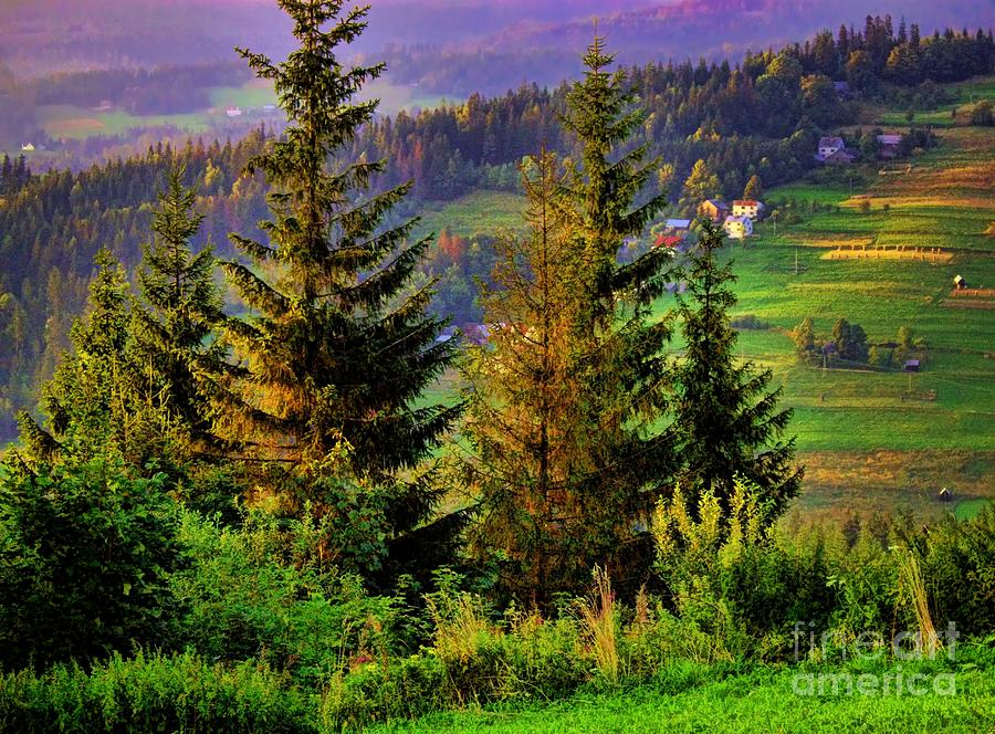Trees Photograph - Beskidy Mountains by Mariola Bitner