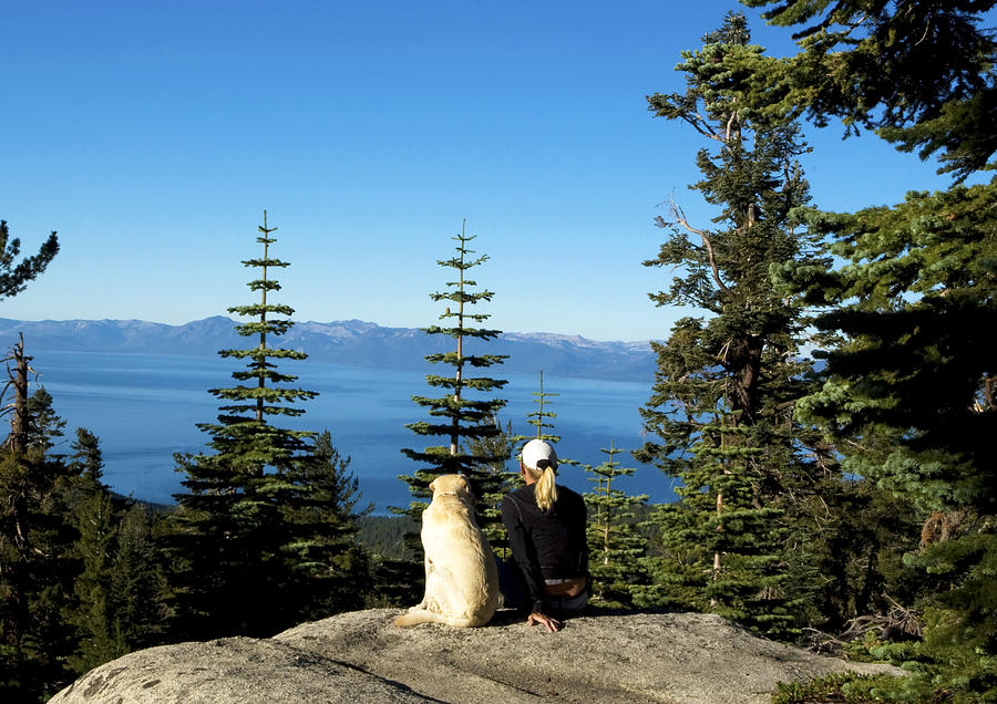 California Photograph - Best Buddies At Lake Tahoe by Waterdancer
