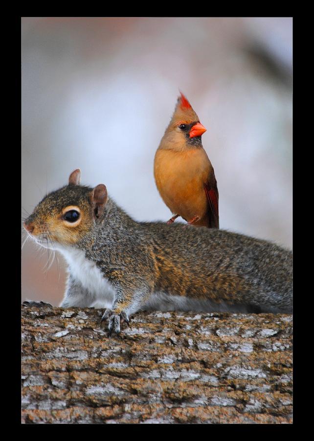 Squirrel Photograph - Best Buds by Jai Johnson