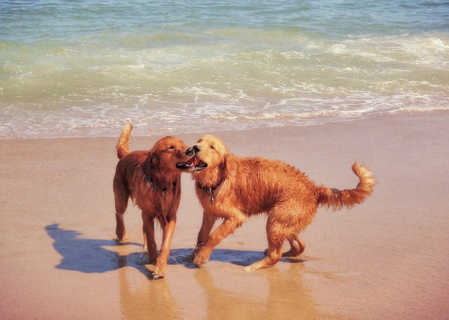 Dog Photograph - Best Buds by JAMART Photography