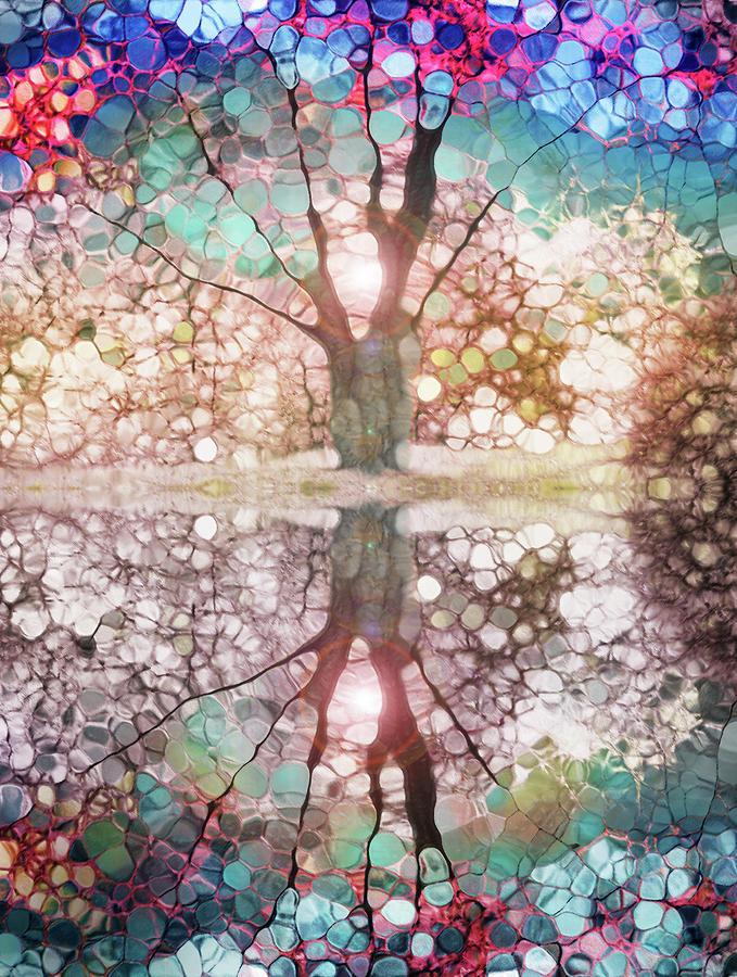 Tree Photograph - Best Face Forward by Tara Turner