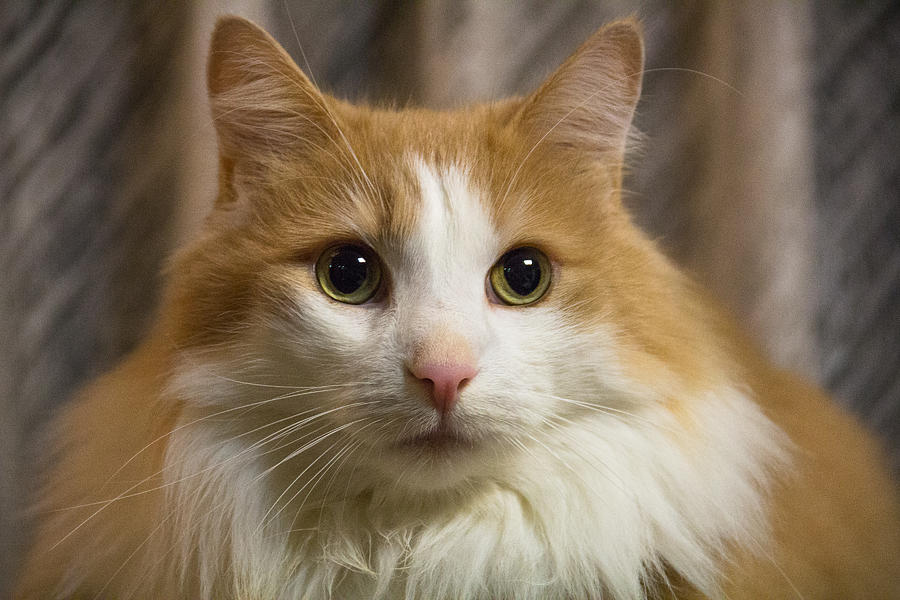 Cats Photograph - Best Friend by Peteris Vaivars