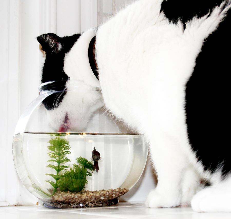 Cat Photograph - Best Friends by Danielle Miller