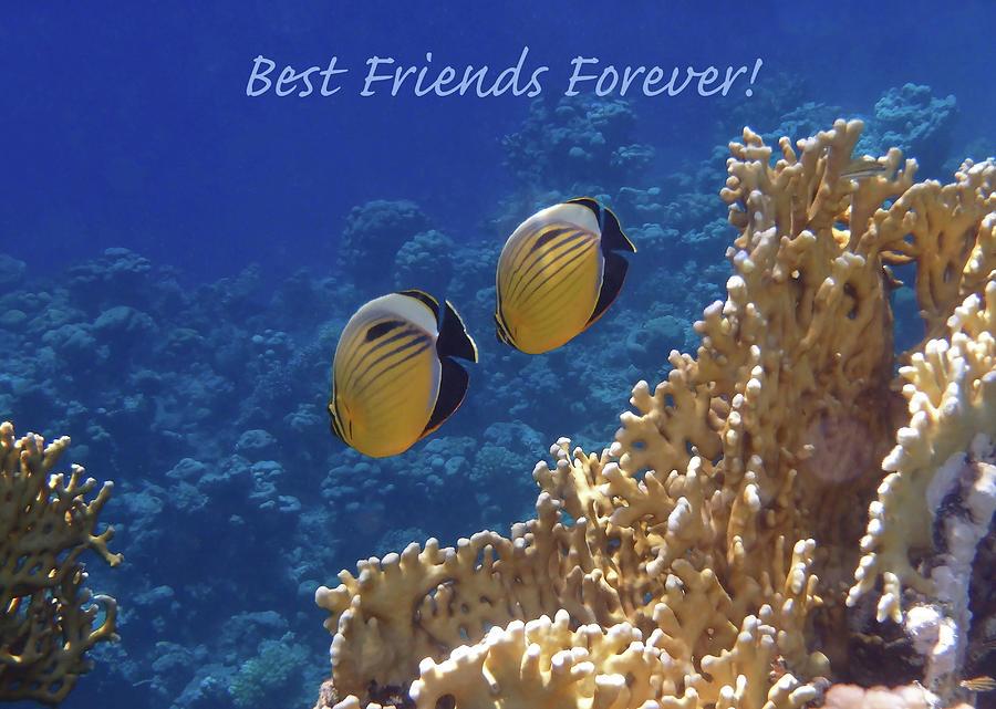 Sealife Photograph - Best Friends Forever by Johanna Hurmerinta