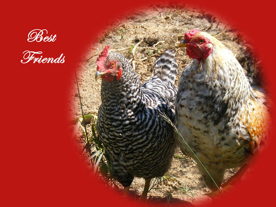 Chickens Photograph - Best Friends by James and Vickie Rankin