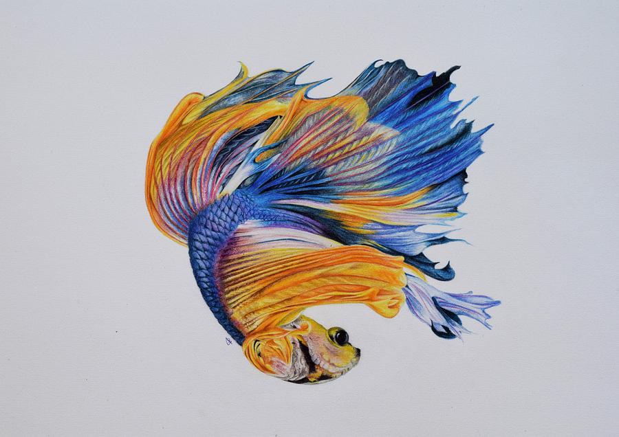 Betta Fish 3 Drawing by Biophilic Art Betta Fish Drawings