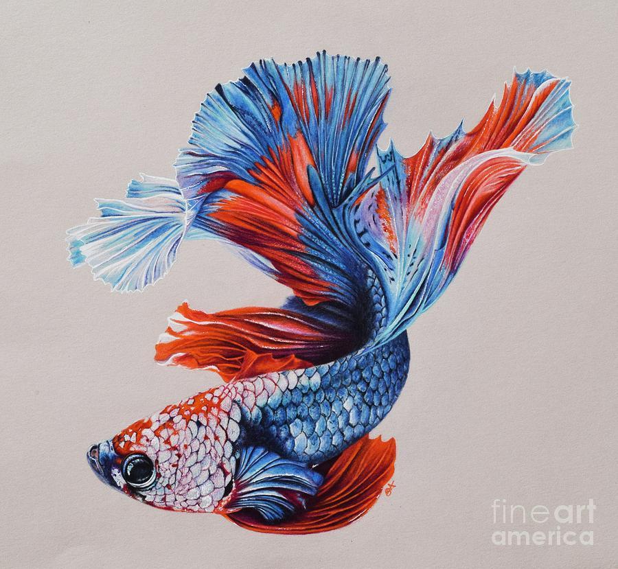Betta Fish 5 Drawing by Biophilic Art